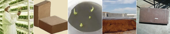 Buffered Cocopeat (< 4mm Grades for Tissue culture)