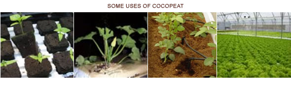 Uses of Cocopeat